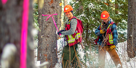 Forestry Workers Callout