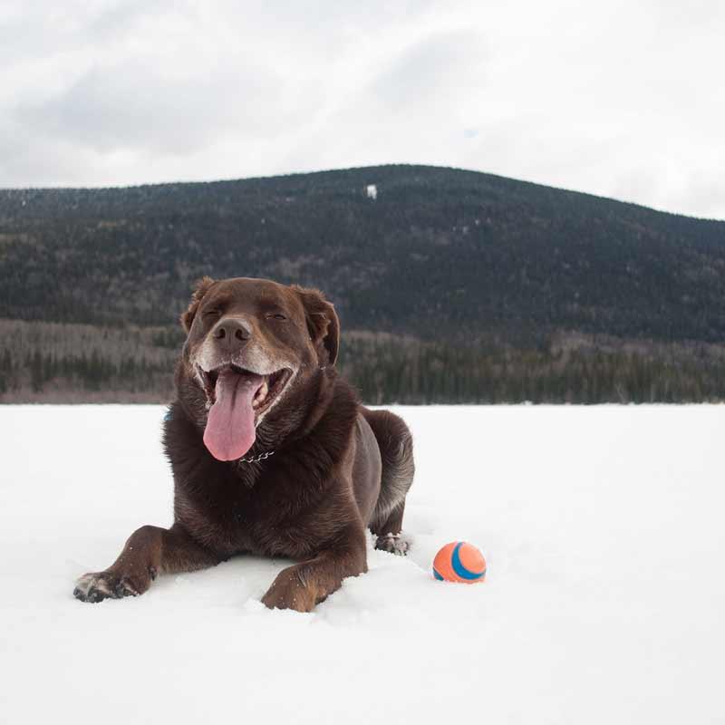 Dog Ball Cropped
