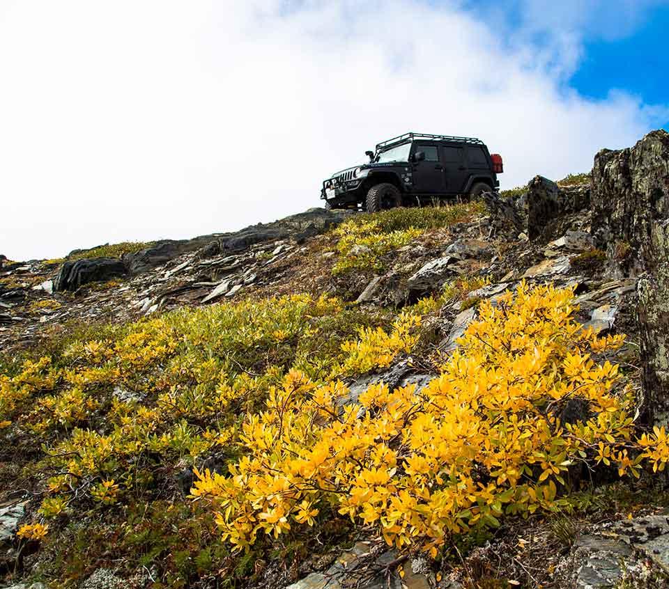Jeep Morfee Gold