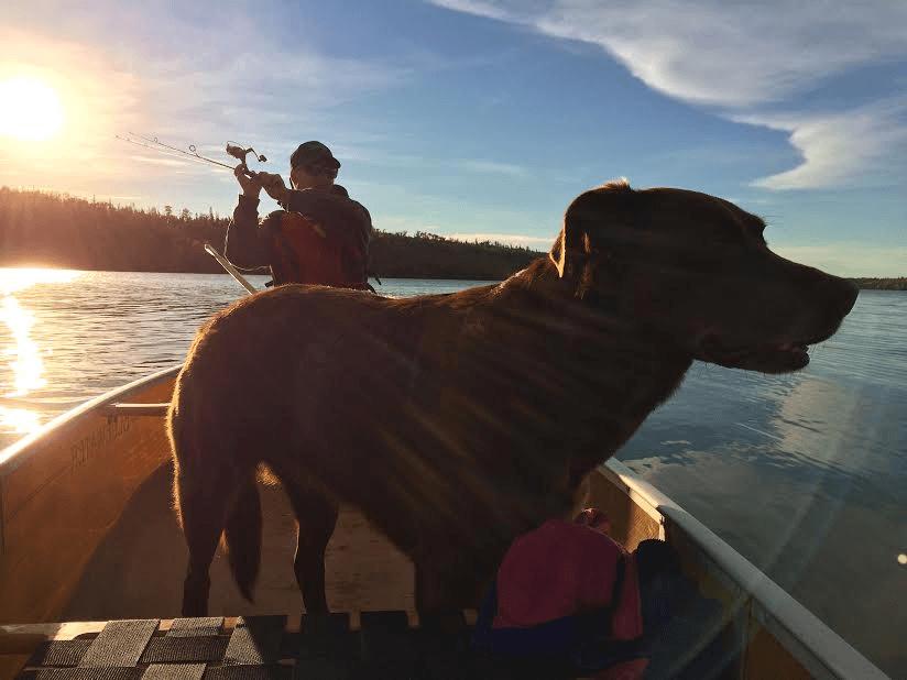 dog in boat