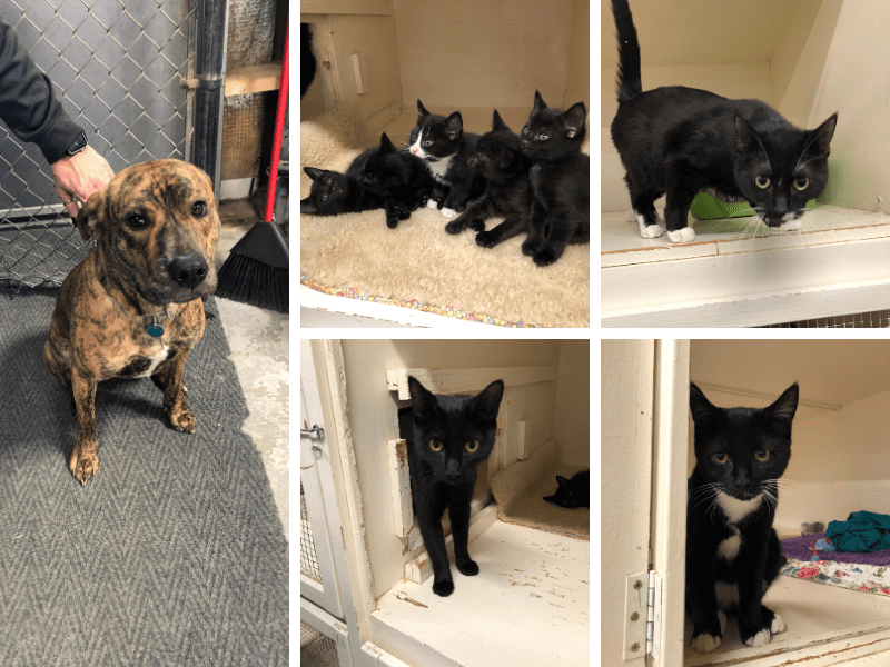 Cats & Dogs for Adoption