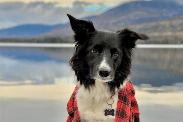 Plaid Friday - Bandit